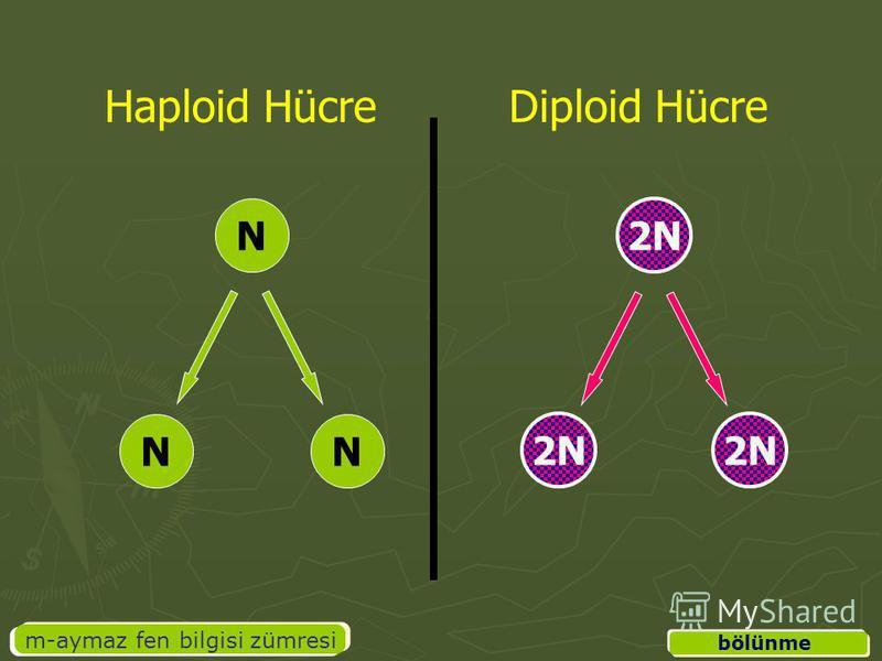 m-aymaz fen bilgisi zümresi bölünme Haploid HücreDiploid Hücre NN N 2N