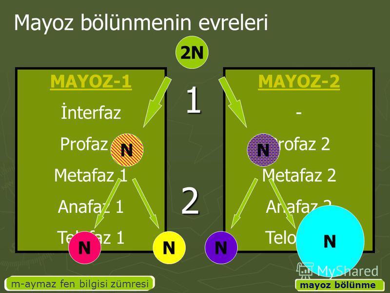 MAYOZ-2 - Profaz 2 Metafaz 2 Anafaz 2 Telofaz 2 MAYOZ-1 İnterfaz Profaz 1 Metafaz 1 Anafaz 1 Telofaz 1 m-aymaz fen bilgisi zümresi mayoz bölünme Mayoz bölünmenin evreleri 2N NN NNN N 1 2