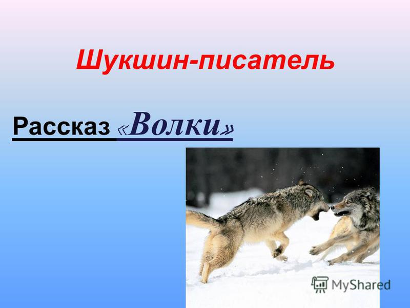 Шукшин-писатель Рассказ « Волки »