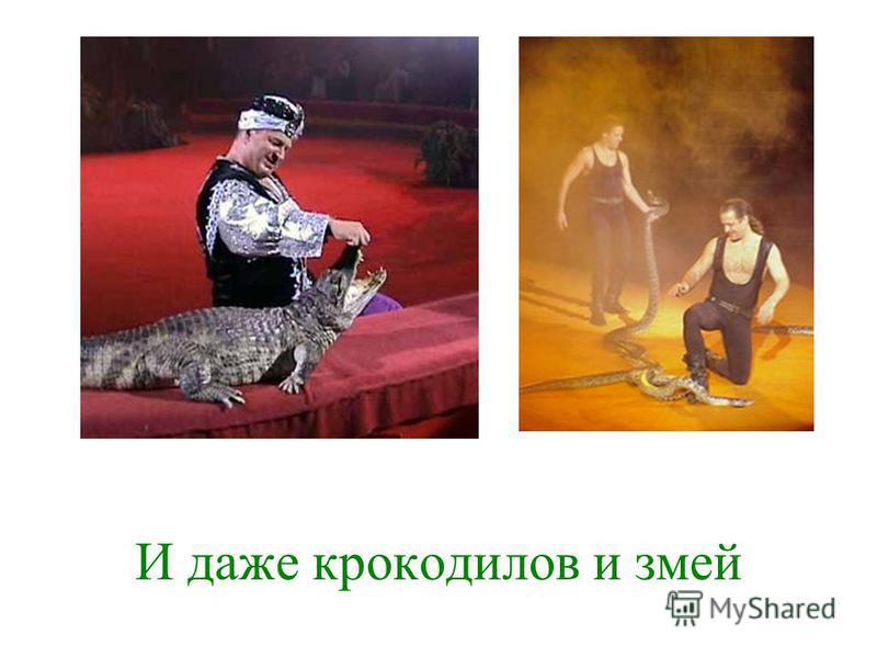 И даже крокодилов и змей