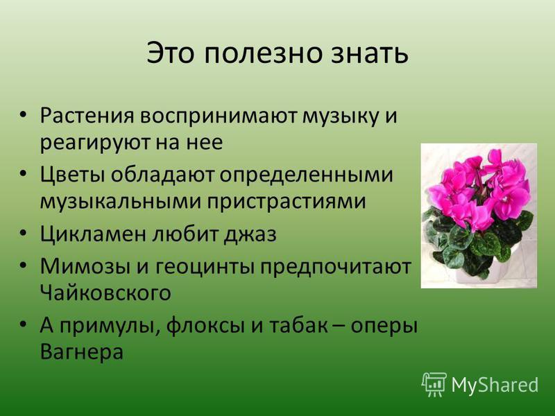 Это полезно знать Растения воспринимают музыку и реагируют на нее Цветы обладают определенными музыкальными пристрастиями Цикламен любит джаз Мимозы и геоцинты предпочитают Чайковского А примулы, флоксы и табак – оперы Вагнера