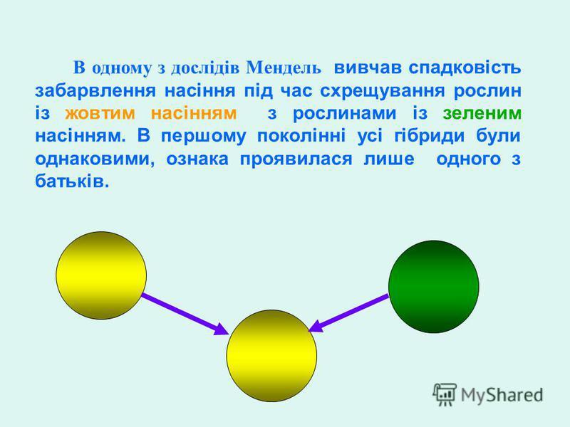 В одному з дослідів Мендель вивчав спадковість забарвлення насіння під час схрещування рослин із жовтим насінням з рослинами із зеленим насінням. В першому поколінні усі гібриди були однаковими, ознака проявилася лише одного з батьків.