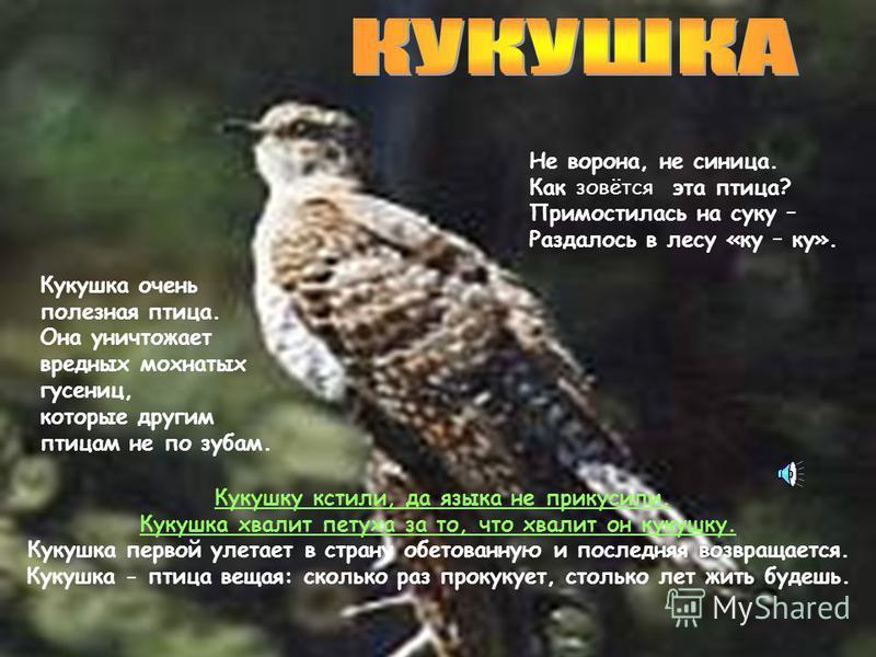 Большой пёстрый дятел величиной крупнее скворца, вес 7295 г. Спина, верх головы и шеи, хвост, полосы у клюва чёрные. Брюшко, грудь, горло, щеки, лоб, полосы на крыльях и хвосте белые. У самцов красные подхвостье и верх головы, у самок голова чёрная.
