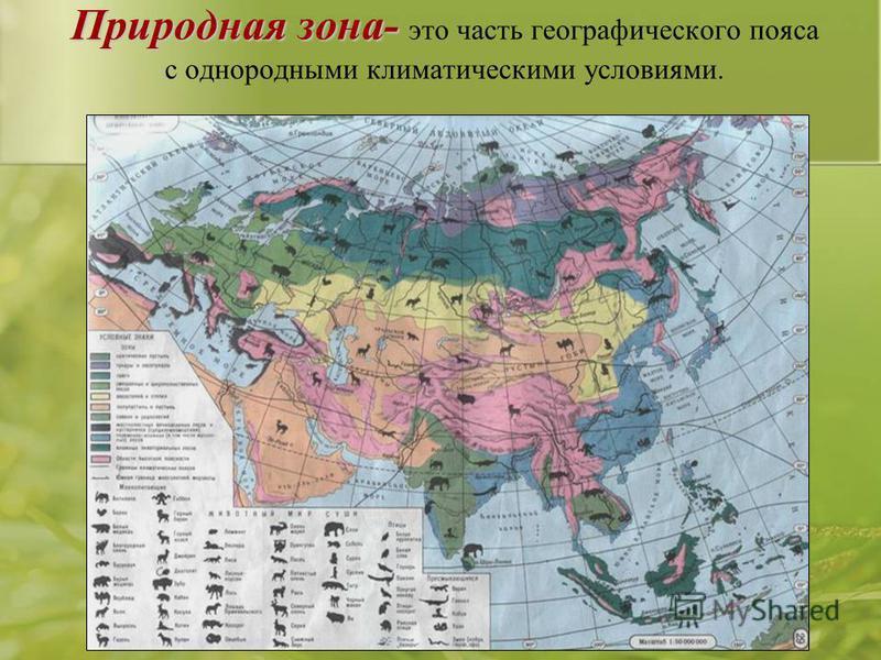 Природная зона- Природная зона- это часть географического пояса с однородными климатическими условиями.