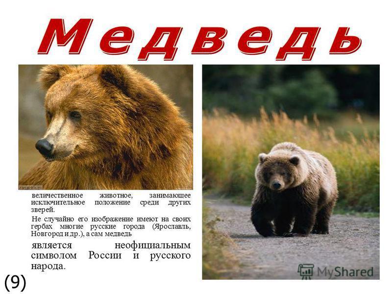 величественное животное, занимающее исключительное положение среди других зверей. Не случайно его изображение имеют на своих гербах многие русские города (Ярославль, Новгород и др.), а сам медведь является неофициальным символом России и русского нар