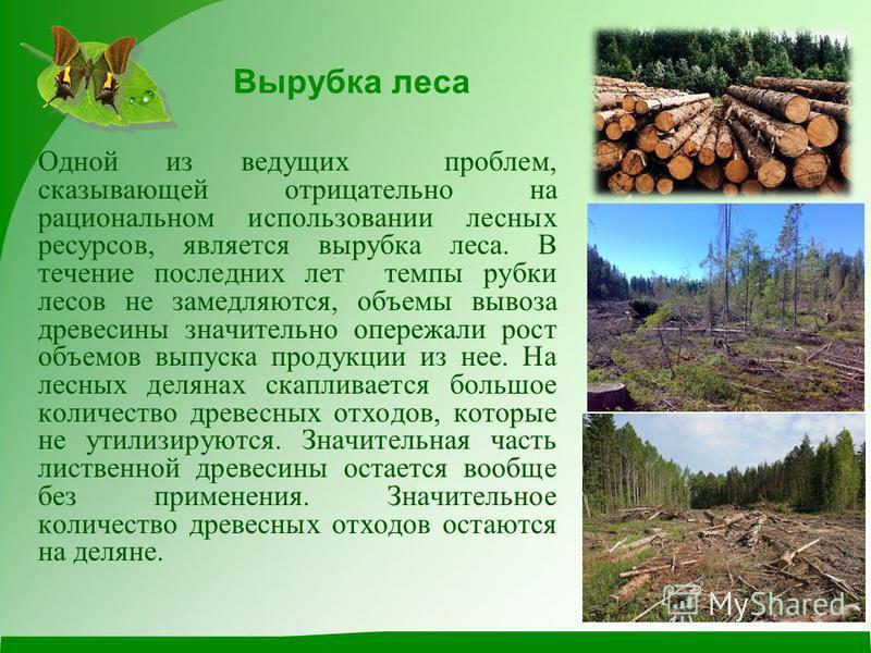 Вырубка леса Одной из ведущих проблем, сказывающей отрицательно на рациональном использовании лесных ресурсов, является вырубка леса. В течение последних лет темпы рубки лесов не замедляются, объемы вывоза древесины значительно опережали рост объемов