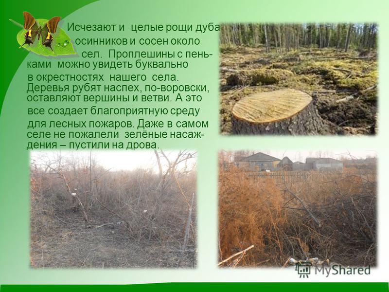 Исчезают и целые рощи дуба, осинников и сосен около сел. Проплешины с пень- коми можно увидеть буквально в окрестностях нашего села. Деревья рубят наспех, по-воровски, оставляют вершины и ветви. А это все создает благоприятную среду для лесных пожаро