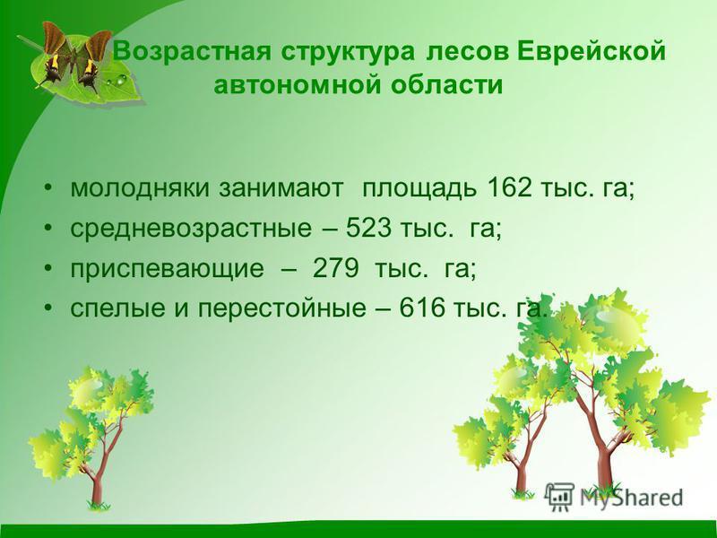 Возрастная структура лесов Еврейской автономной области молодняки занимают площадь 162 тыс. га; средневозрастные – 523 тыс. га; приспевающие – 279 тыс. га; спелые и перестойные – 616 тыс. га.