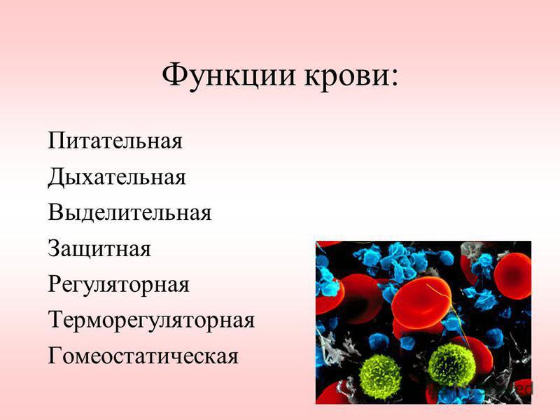 Функции крови: Питательная Дыхательная Выделительная Защитная Регуляторная Терморегуляторная Гомеостатическая