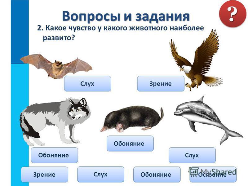 2. Какое чувство у какого животного наиболее развито? Вопросы и задания Вопросы и задания?? Зрение СлухОсязание Обоняние Слух Зрение Обоняние Слух