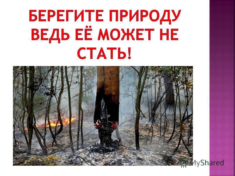 Этот снимок сделан в Мамайском лесу г. Ставрополя 14.02.2009 г. На фоне первых подснежников.
