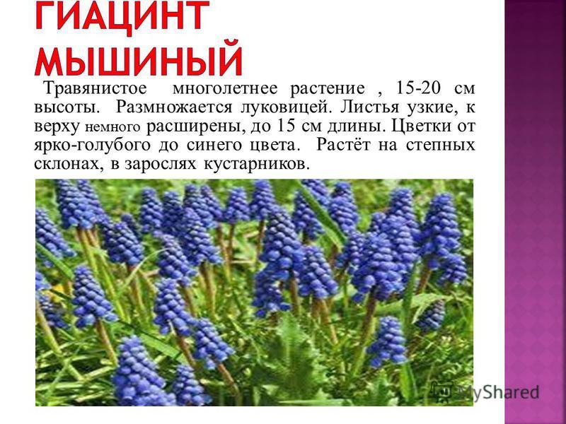 1. гиацинт мышиный (МУСКАРИ) 2. купена лекарственная 3. лук медвежий (ЧЕРЕМША) 4. первоцвет весенний (ПРИМУЛА) 5. подснежник кавказский