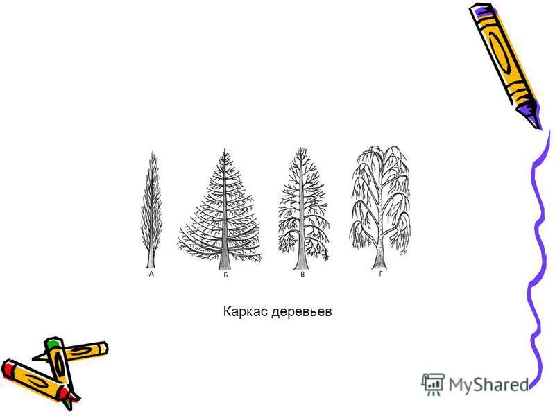 Каркас деревьев