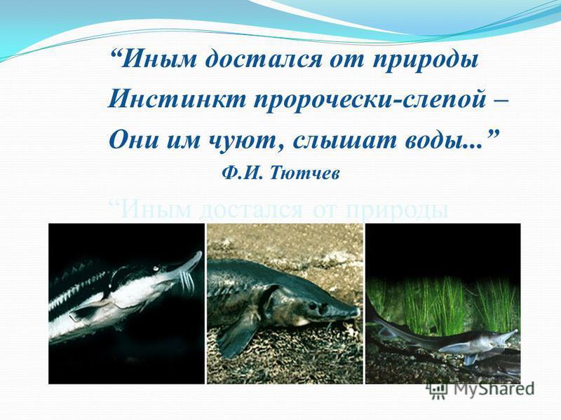 Иным достался от природы Инстинкт пророчески-слепой – Они им чуют, слышат воды... Ф.И. Тютчев Иным достался от природы Инстинкт пророчески-слепой – Они им чуют, слышат воды... Ф.И. Тютчев