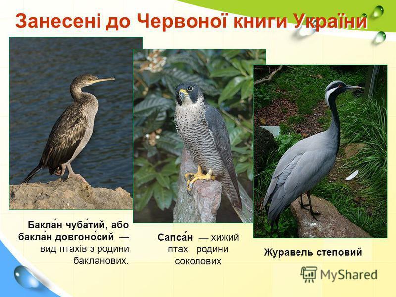 Занесені до Червоної книги України Бакла́н чуба́тий, або бакла́н довгоно́сий вид птахів з родини бакланових. Сапса́н хижий птах родини соколових Журавель степовий