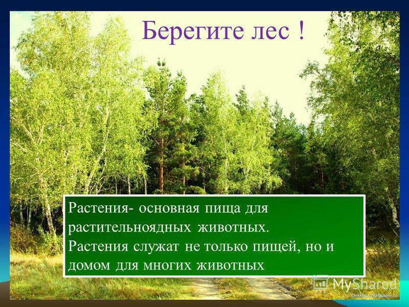 Берегите лес !. Растения- основная пища для растительноядных животных. Растения служат не только пищей, но и домом для многих животных