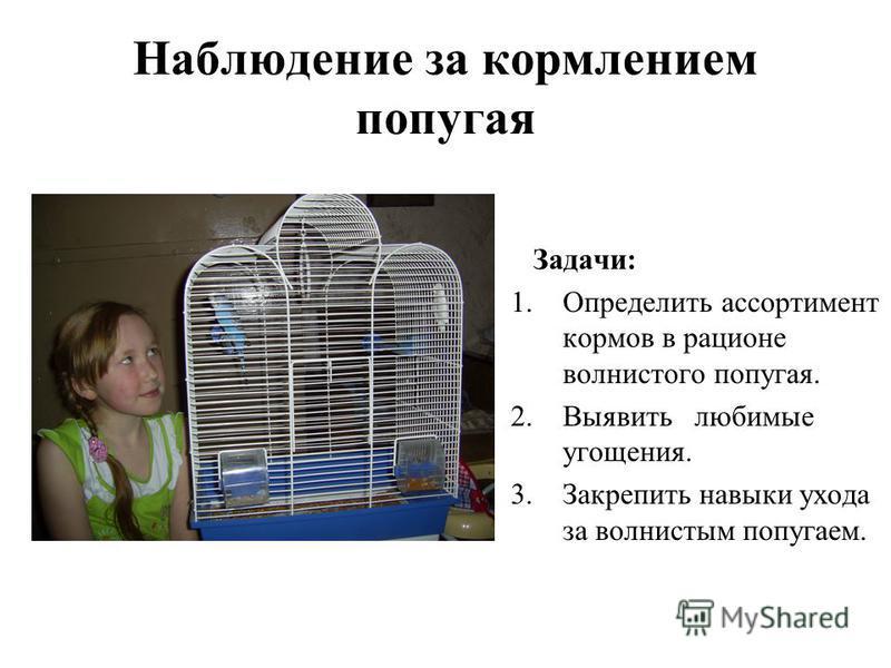 Наблюдение за кормлением попугая Задачи: 1. Определить ассортимент кормов в рационе волнистого попугая. 2. Выявить любимые угощения. 3. Закрепить навыки ухода за волнистым попугаем.