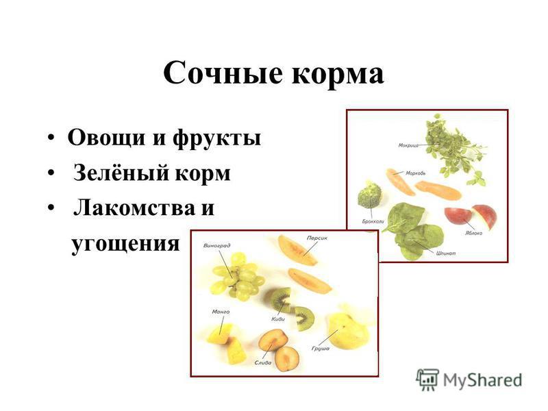 Сочные корма Овощи и фрукты Зелёный корм Лакомства и угощения