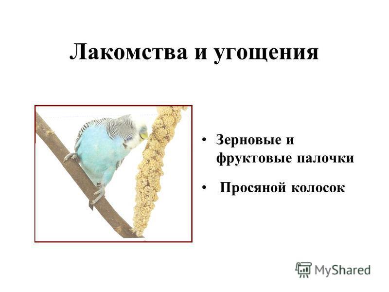 Лакомства и угощения Зерновые и фруктовые палочки Просяной колосок