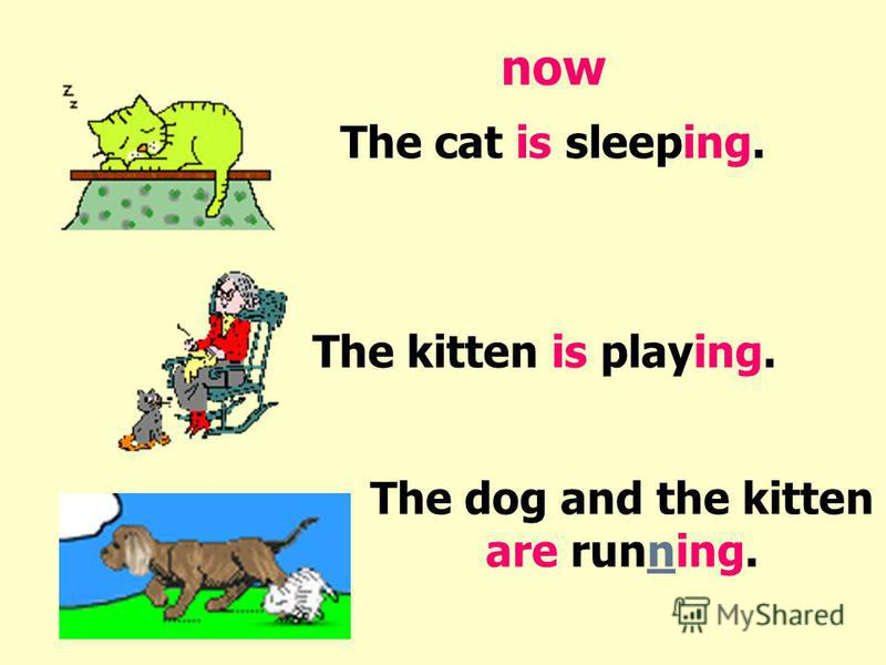 The cat is sleeping. The kitten is playing. The dog and the kitten are running. now