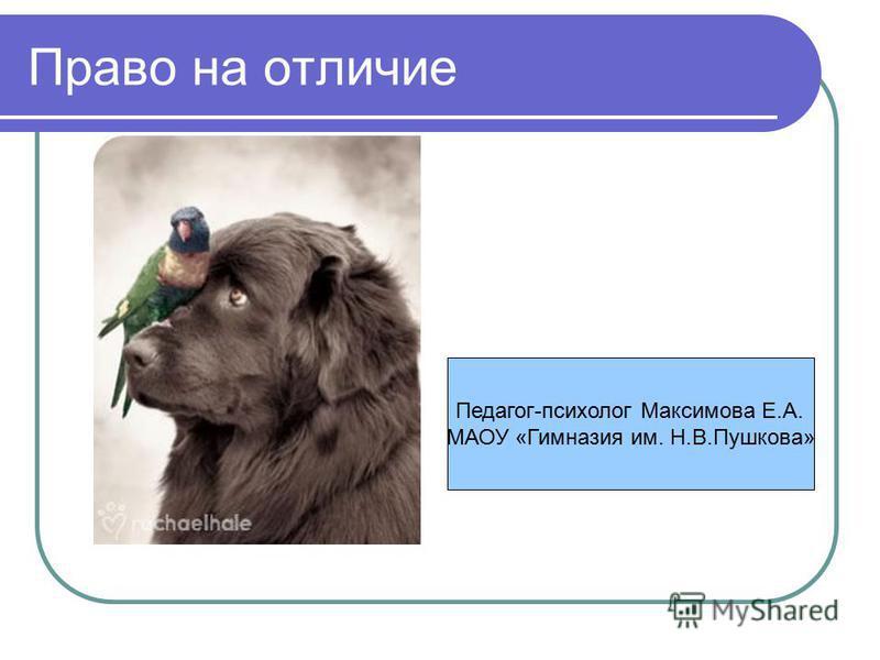 Право на отличие Педагог-психолог Максимова Е.А. МАОУ «Гимназия им. Н.В.Пушкова»