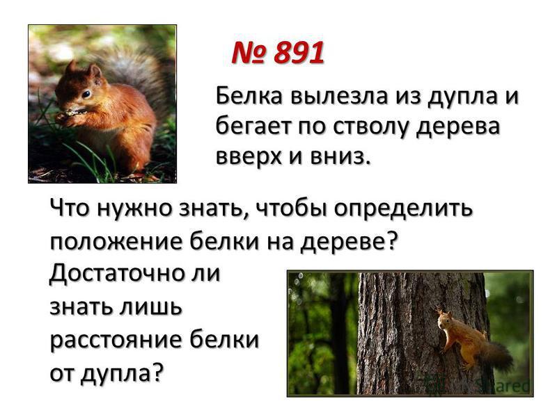 Белка вылезла из дупла и бегает по стволу дерева вверх и вниз. Достаточно ли знать лишь расстояние белки от дупла? Что нужно знать, чтобы определить положение белки на дереве? 891 891