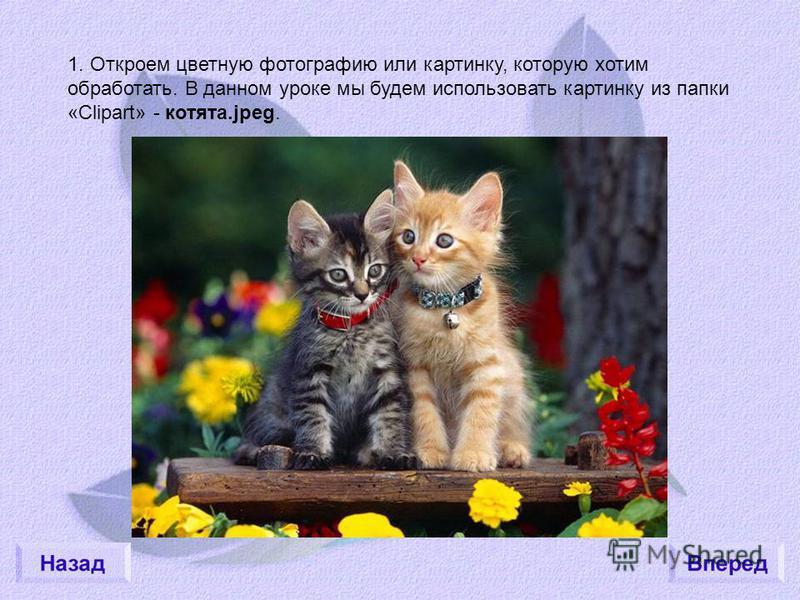 1. Откроем цветную фотографию или картинку, которую хотим обработать. В данном уроке мы будем использовать картинку из папки «Clipart» - котята.jpeg.