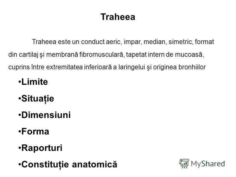 Traheea Limite Situaţie Dimensiuni Forma Raporturi Constituţie anatomică Traheea este un conduct aeric, impar, median, simetric, format din cartilaj şi membrană fibromusculară, tapetat intern de mucoasă, cuprins între extremitatea inferioară a laring
