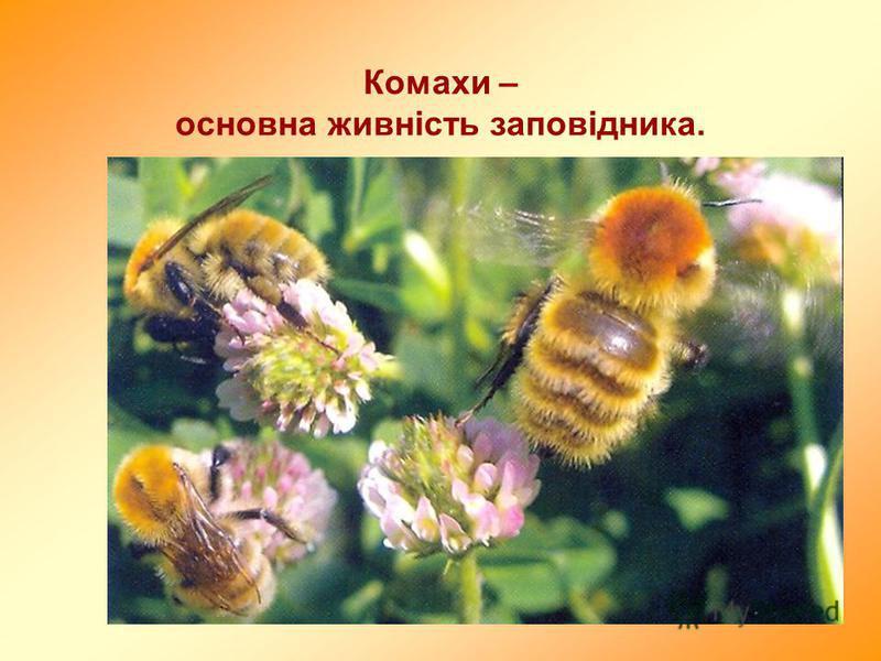 Комахи – основна живність заповідника.