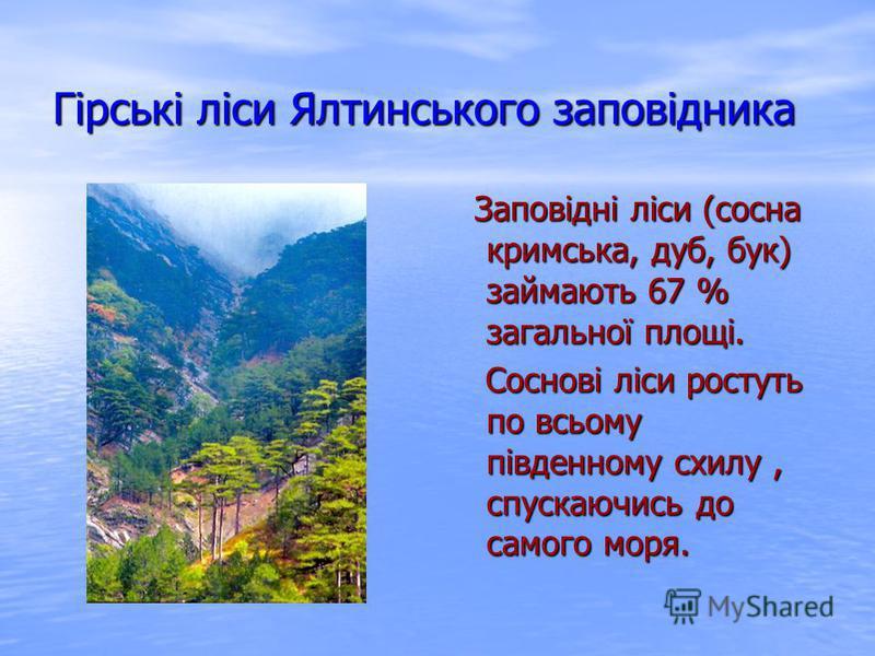 Гірські ліси Ялтинського заповідника Заповідні ліси (сосна кримська, дуб, бук) займають 67 % загальної площі. Соснові ліси ростуть по всьому південному схилу, спускаючись до самого моря.