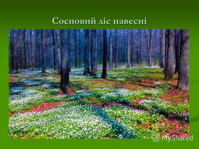 Сосновий ліс навесні