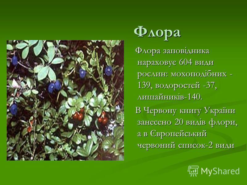 Флора Флора заповідника нараховує 604 види рослин: мохоподібних - 139, водоростей -37, лишайників-140. В Червону книгу України занесено 20 видів флори, а в Європейський червоний список-2 види