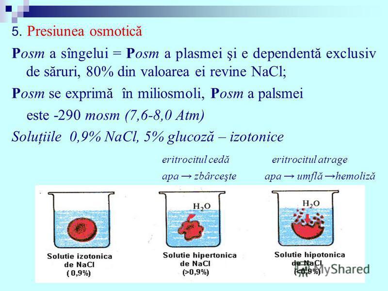 5. Presiunea osmotică Posm a sîngelui = Posm a plasmei şi e dependentă exclusiv de săruri, 80% din valoarea ei revine NaCl; Posm se exprimă în miliosmoli, Posm a palsmei este -290 mosm (7,6-8,0 Atm) Soluţiile 0,9% NaCl, 5% glucoză – izotonice eritroc