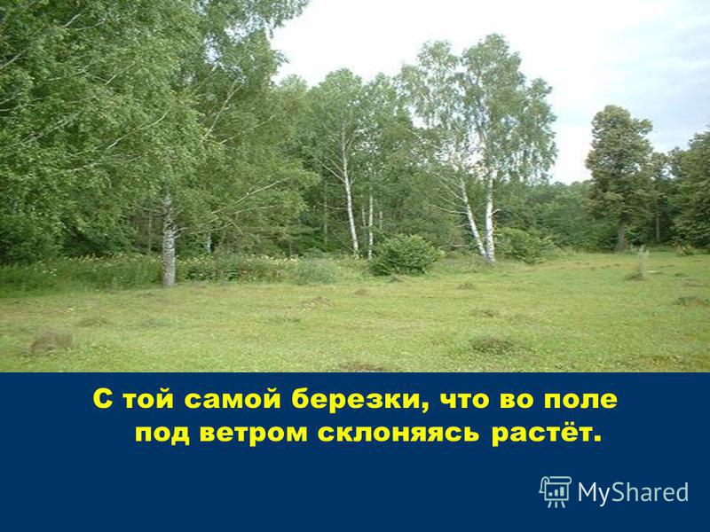 С той самой березки, что во поле под ветром склоняясь растёт.