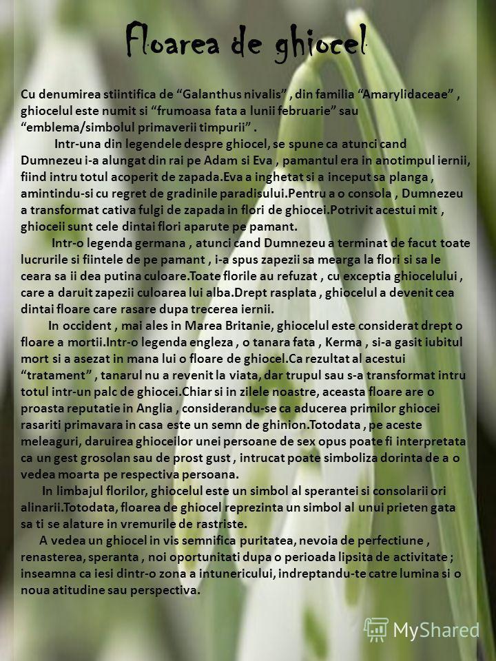 Floarea de ghiocel Cu denumirea stiintifica de Galanthus nivalis, din familia Amarylidaceae, ghiocelul este numit si frumoasa fata a lunii februarie sau emblema/simbolul primaverii timpurii. Intr-una din legendele despre ghiocel, se spune ca atunci c