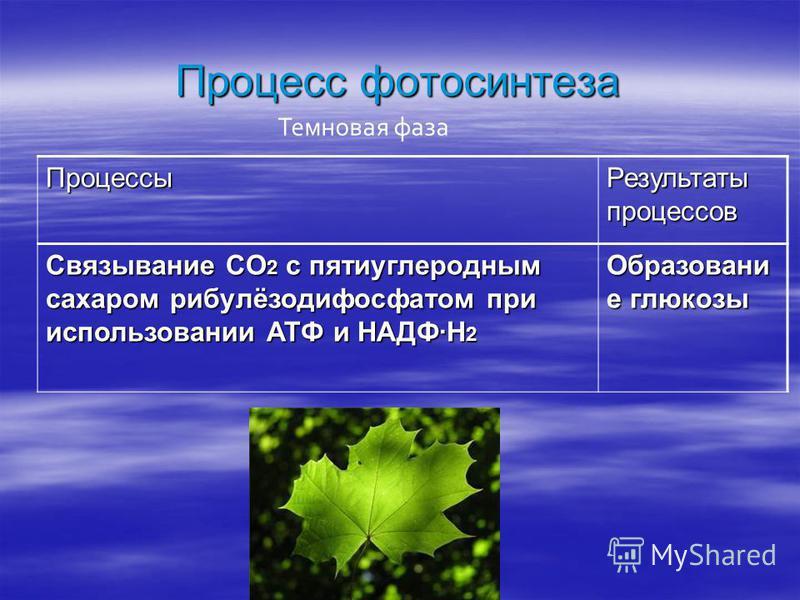 Процессы Результаты процессов Связывание CO 2 с пяти углеродным сахаром рибулёзодифосфатом при использовании АТФ и НАДФ·H 2 Образовани е глюкозы Процесс фотосинтеза Темновая фаза