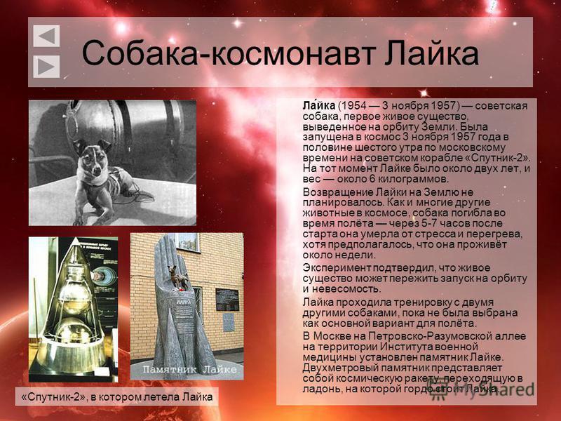 Собака-космонавт Лайка Ла́йка (1954 3 ноября 1957) советская собака, первое живое существо, выведенное на орбиту Земли. Была запущена в космос 3 ноября 1957 года в половине шестого утра по московскому времени на советском корабле «Спутник-2». На тот