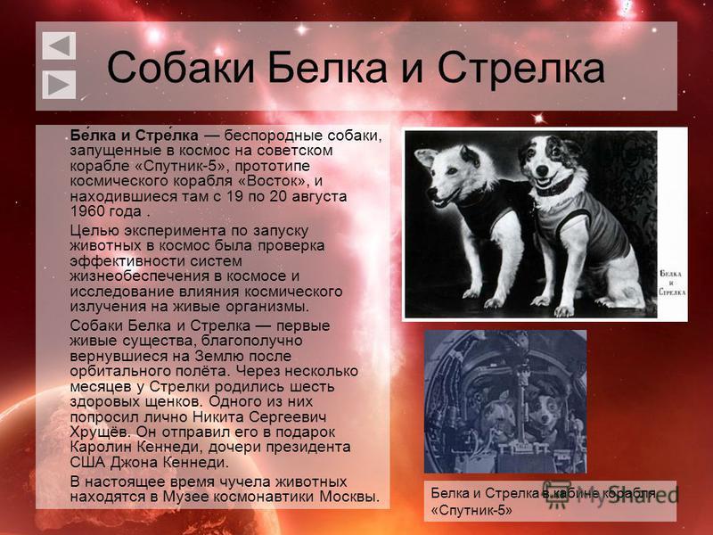 Собаки Белка и Стрелка Бе́лка и Стре́лка беспородные собаки, запущенные в космос на советском корабле «Спутник-5», прототипе космического корабля «Восток», и находившиеся там с 19 по 20 августа 1960 года. Целью эксперимента по запуску животных в косм