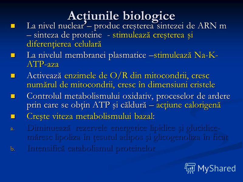 Acţiunile biologice La nivel nuclear – produc creşterea sintezei de ARN m – sinteza de proteine - stimulează creşterea şi diferenţierea celulară La nivel nuclear – produc creşterea sintezei de ARN m – sinteza de proteine - stimulează creşterea şi dif