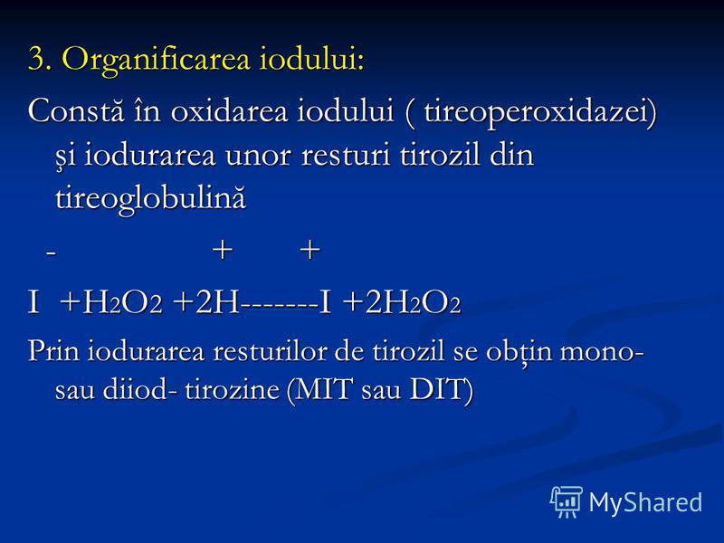 3. Organificarea iodului: Constă în oxidarea iodului ( tireoperoxidazei) şi iodurarea unor resturi tirozil din tireoglobulină - + + - + + I +H 2 O 2 +2H-------I +2H 2 O 2 Prin iodurarea resturilor de tirozil se obţin mono- sau diiod- tirozine (MIT sa