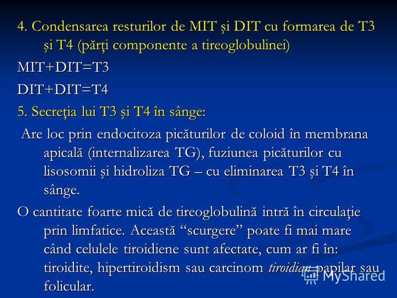 4. Condensarea resturilor de MIT şi DIT cu formarea de T3 şi T4 (părţi componente a tireoglobulinei) MIT+DIT=T3DIT+DIT=T4 5. Secreţia lui T3 şi T4 în sânge: Are loc prin endocitoza picăturilor de coloid în membrana apicală (internalizarea TG), fuziun