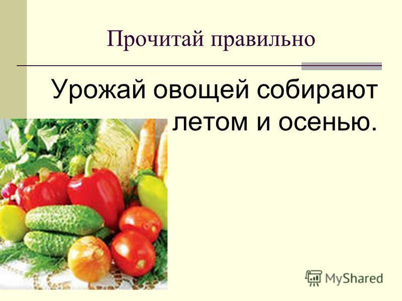 Прочитай правильно Урожай овощей собирают летом и осенью.