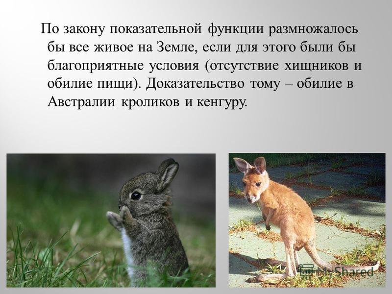 По закону показательной функции размножалось бы все живое на Земле, если для этого были бы благоприятные условия ( отсутствие хищников и обилие пищи ). Доказательство тому – обилие в Австралии кроликов и кенгуру.