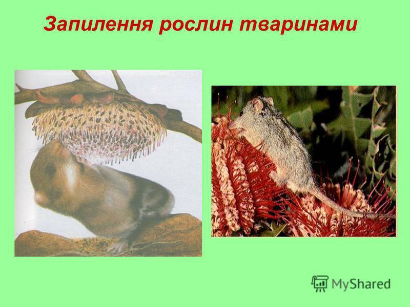 Запилення рослин тваринами