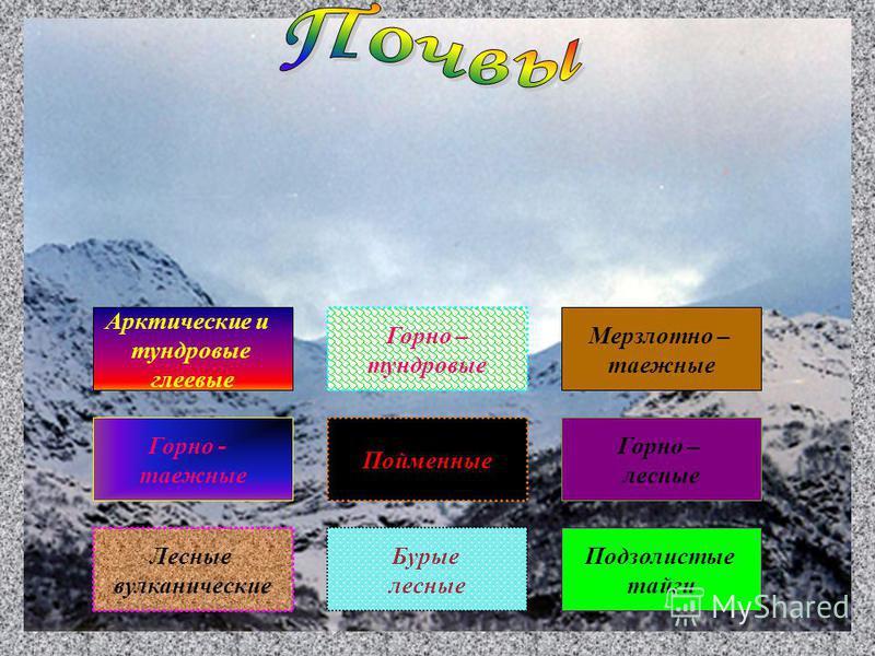 Лесные вулканические Арктические и тундровые глеевые Горно - таежные Подзолистые тайги Горно – лесные Мерзлотно – таежные Пойменные Горно – тундровые Бурые лесные