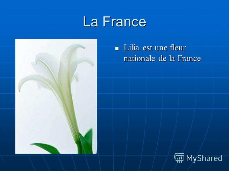La France Lilia est une fleur nationale de la France Lilia est une fleur nationale de la France