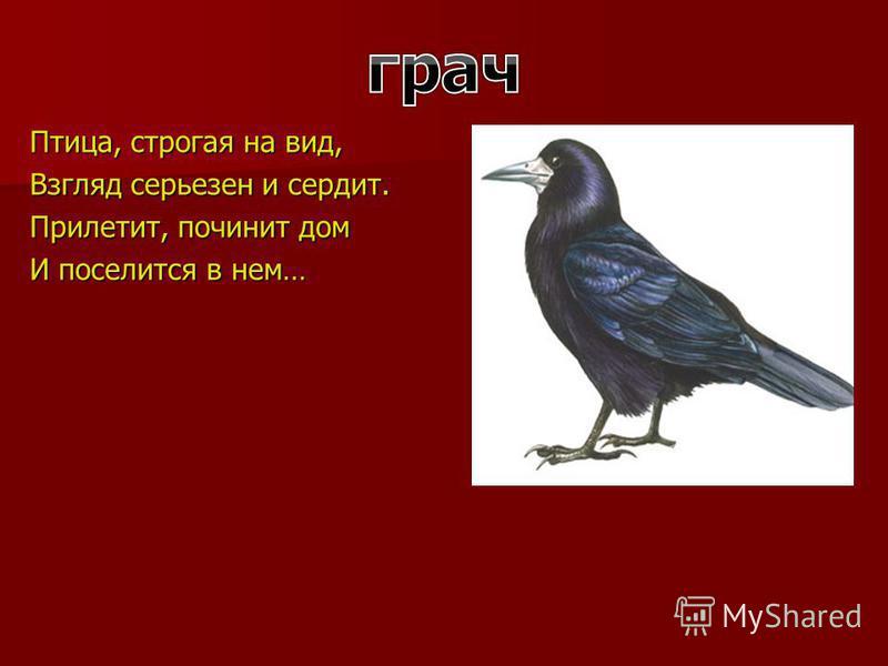 Птица, строгая на вид, Взгляд серьезен и сердит. Прилетит, починит дом И поселится в нем…