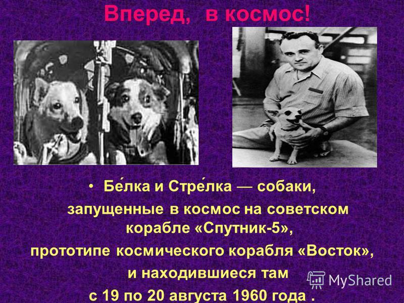 Вперед, в космос! Бе́лука и Стре́лука собаки, запущенные в космос на советском корабле «Спутник-5», прототипе космического корабля «Восток», и находившиеся там с 19 по 20 августа 1960 года.