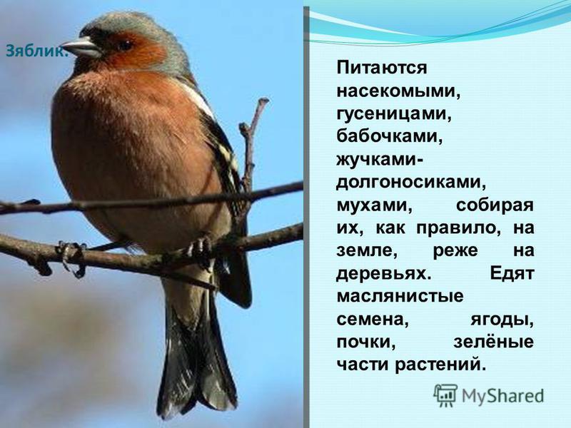 СКВОРЕЦ Скворец уже тем необыкновенен, что оперение его уникально красиво! Большинство этих птиц в холодное время года перебирается на юг Европы.Обратно возвращаются в марте. Увидел скворца, весна - у крыльца.