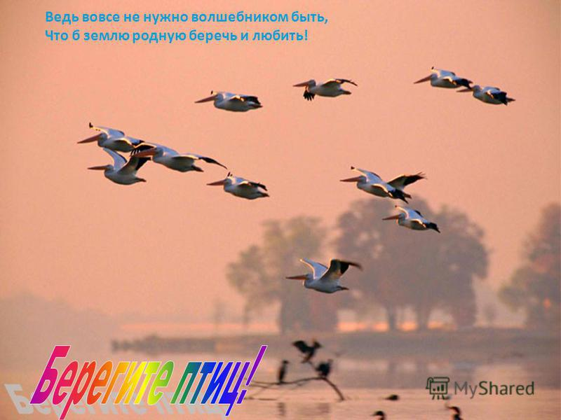 ПОПОЛЗЕНЬ Окраска спинной стороны тела голубовато-серая, брюшной -белая с примесью рыжеватых тонов. От клюва к затылку проходит черная полоса. На хвосте есть белые пятна. Лучше других птиц лазает по деревьям. Это единственная птица, способная передви